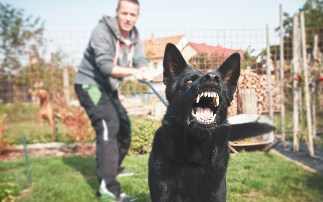 3 Tips for Preventing Aggressive Dog Attacks